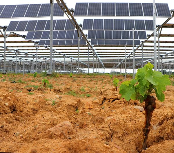 """Featured image for """"Plantation de la première vigne connectée"""""""