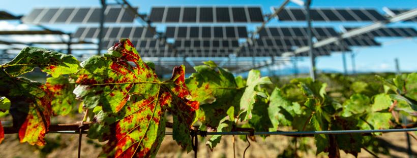 """Featured image for """"Sun'Agri, pionnier de l'agrivoltaïsme, confirme sa position de leader sur le marché lors  des résultats de l'Appel d'Offres Innovation de la CRE !"""""""