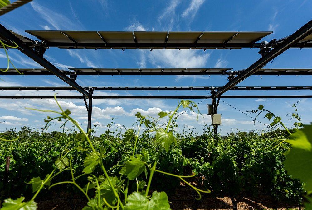 """Featured image for """"La technologie agrivoltaïque de Sun'Agri reconnue comme solution d'adaptation aux changements climatiques"""""""