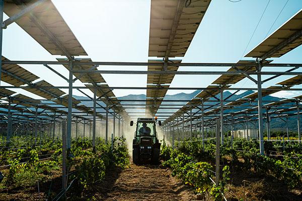 """Featured image for """"Gels de printemps : les pommiers et les vignes placés sous dispositifs agrivoltaïques dynamiques mieux protégés face au froid selon les données scientifiques de Sun'Agri"""""""