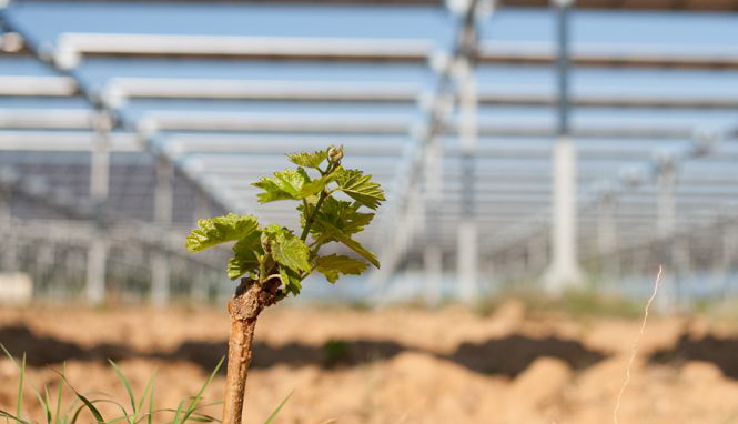 """Featured image for """"Boralex et Sun'Agri s'allient pour développer l'agrivoltaïsme en Europe"""""""