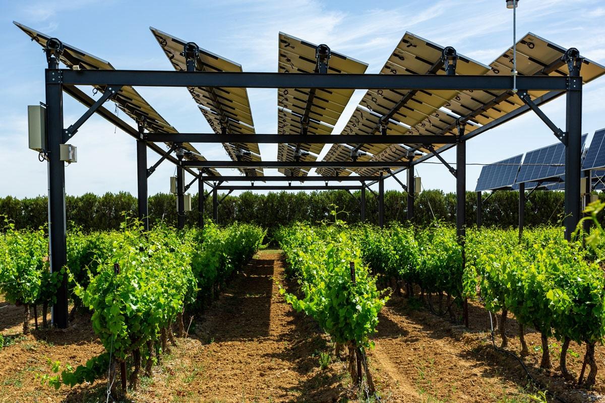 """Featured image for """"Solar Impulse : Sun'Agri labélisé par la fondation de Bertrand Piccard"""""""